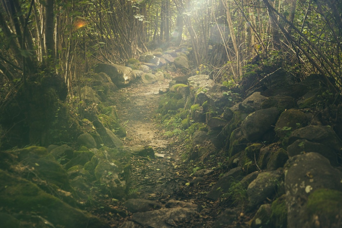 photograph of a forest path